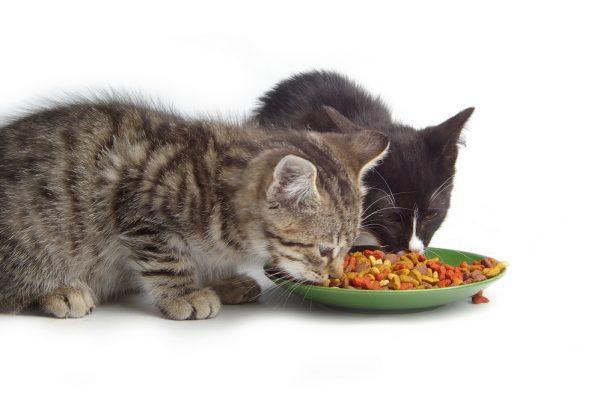 kedilerin beslenmesi