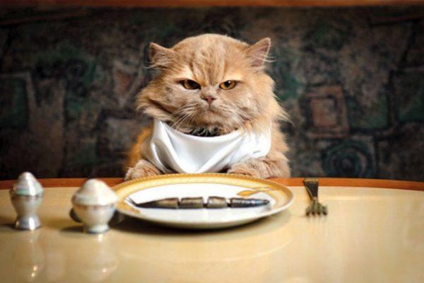 kedi maması