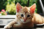 kedilerdeuyuzluk
