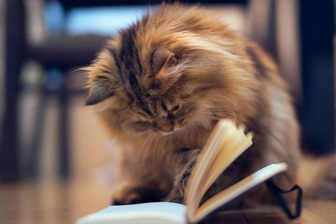 kedi eğitimi