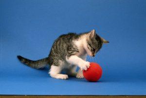 kedinizle oynayın