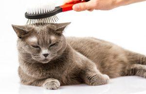 Kedi Tarağı