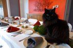 Kediyle Akşam Yemeği
