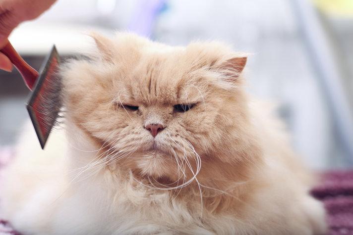 kedi tüyü