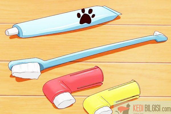 Kedilerin Dişleri Nasıl Temizlenir?