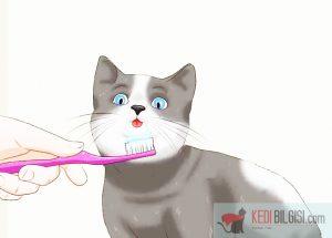 Screenshot 2 300x215 - Kedilerin Dişleri Nasıl Temizlenir?