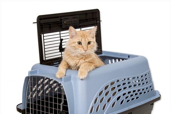 kedi taşıma kutusu