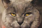022 150x100 - Kedimin Gözleri Neden Sulu ?