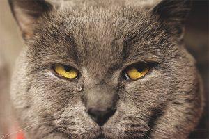 022 300x200 - Kedimin Gözleri Neden Sulu ?