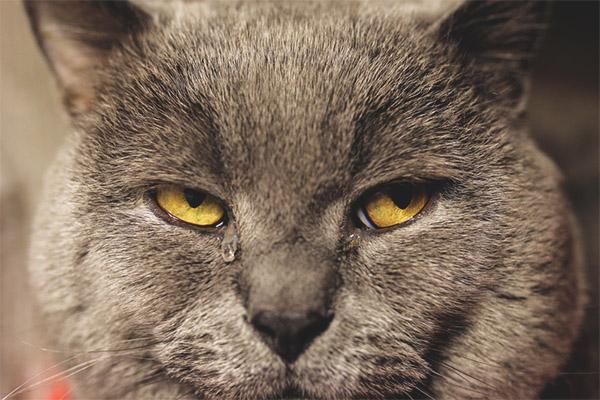 022 - Kedimin Gözleri Neden Sulu ?