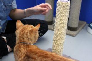 CatScratch3 300x200 - Kediler Mobilyadan Nasıl Uzak Tutulur?