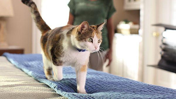 HP PCC md cat training 2 600x340 - Kediler Mobilyadan Nasıl Uzak Tutulur?
