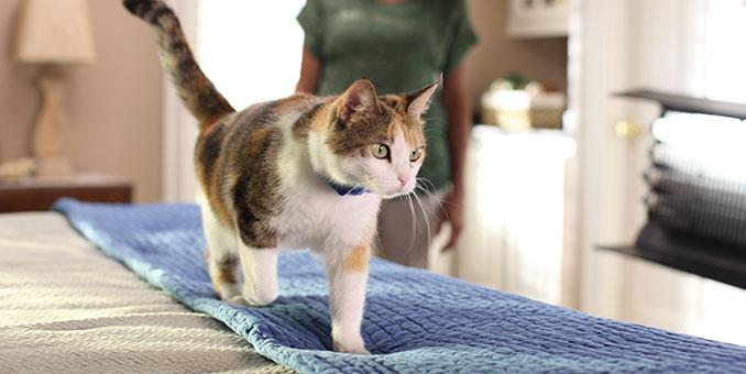 HP PCC md cat training 2 - Kediler Mobilyadan Nasıl Uzak Tutulur?