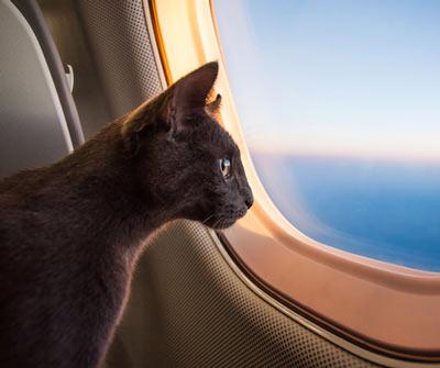 kedi ile seyahat