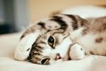 Sweet Cat cats 40485899 1280 1138 150x100 - Kedi Fiyatları