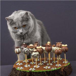 kedi ve çikolata