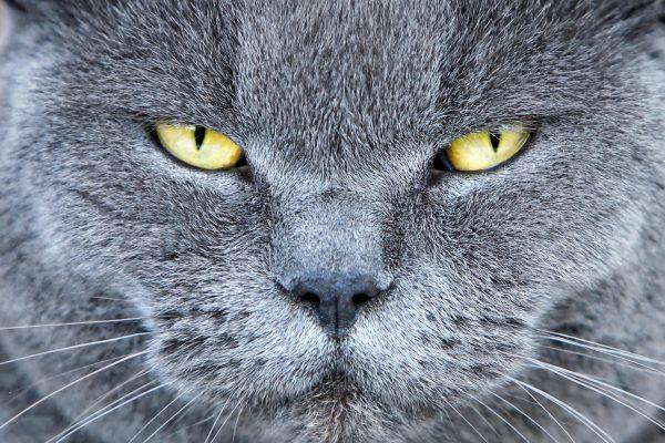 erkek-kedi