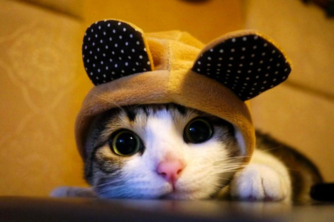 kedi sahiplenme
