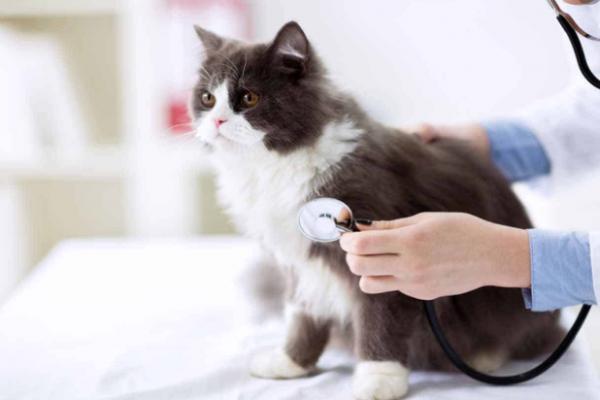 Kedi Aşı Fiyatları