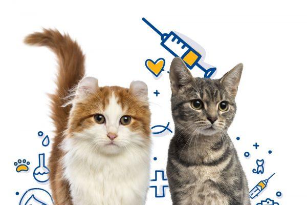 kedi-asilari