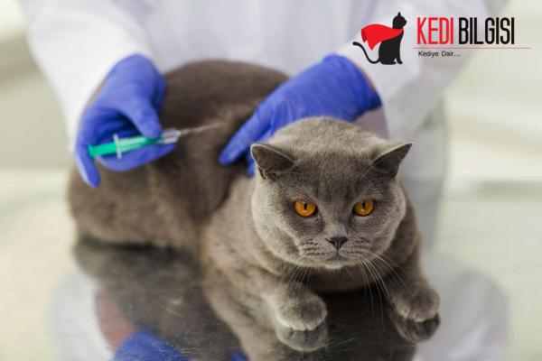 Ev Kedisi Aşı Takvimi