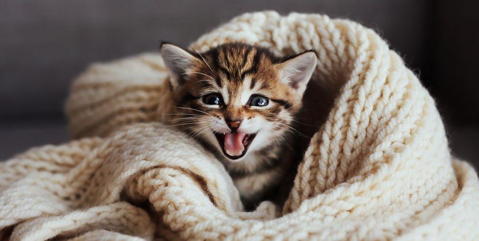 kedi miyavlama şekilleri