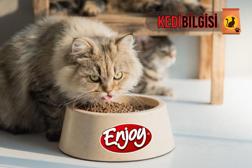 enjoy-kedi-mamasi
