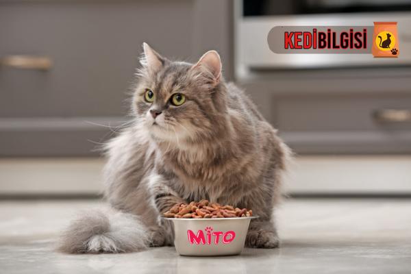mito-kedi-mamasi
