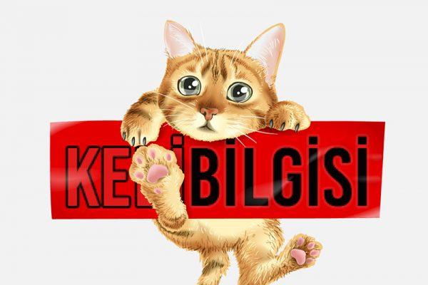 Egzotik Kedi İsimleri